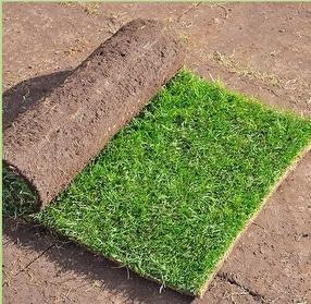Q Grass Tough Garden Turf by Harrowden Turf Ltd