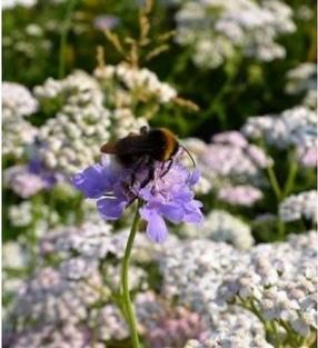 Meadowmat Wild Flower Turf by Harrowden Turf Ltd