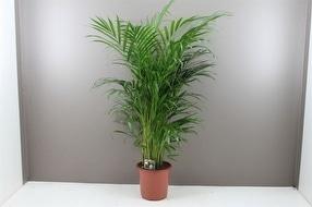 Beautiful Large Indoor Plants by Best4Garden