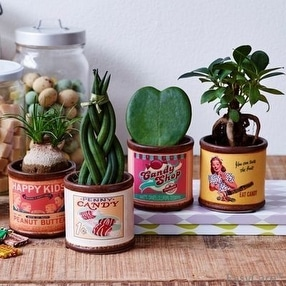 Inspired Plant Gifts by Best4Garden